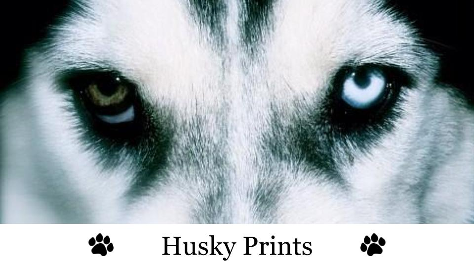 "Husky Prints image (husky dog with paw prints next to the words ""Husky Prints"")"