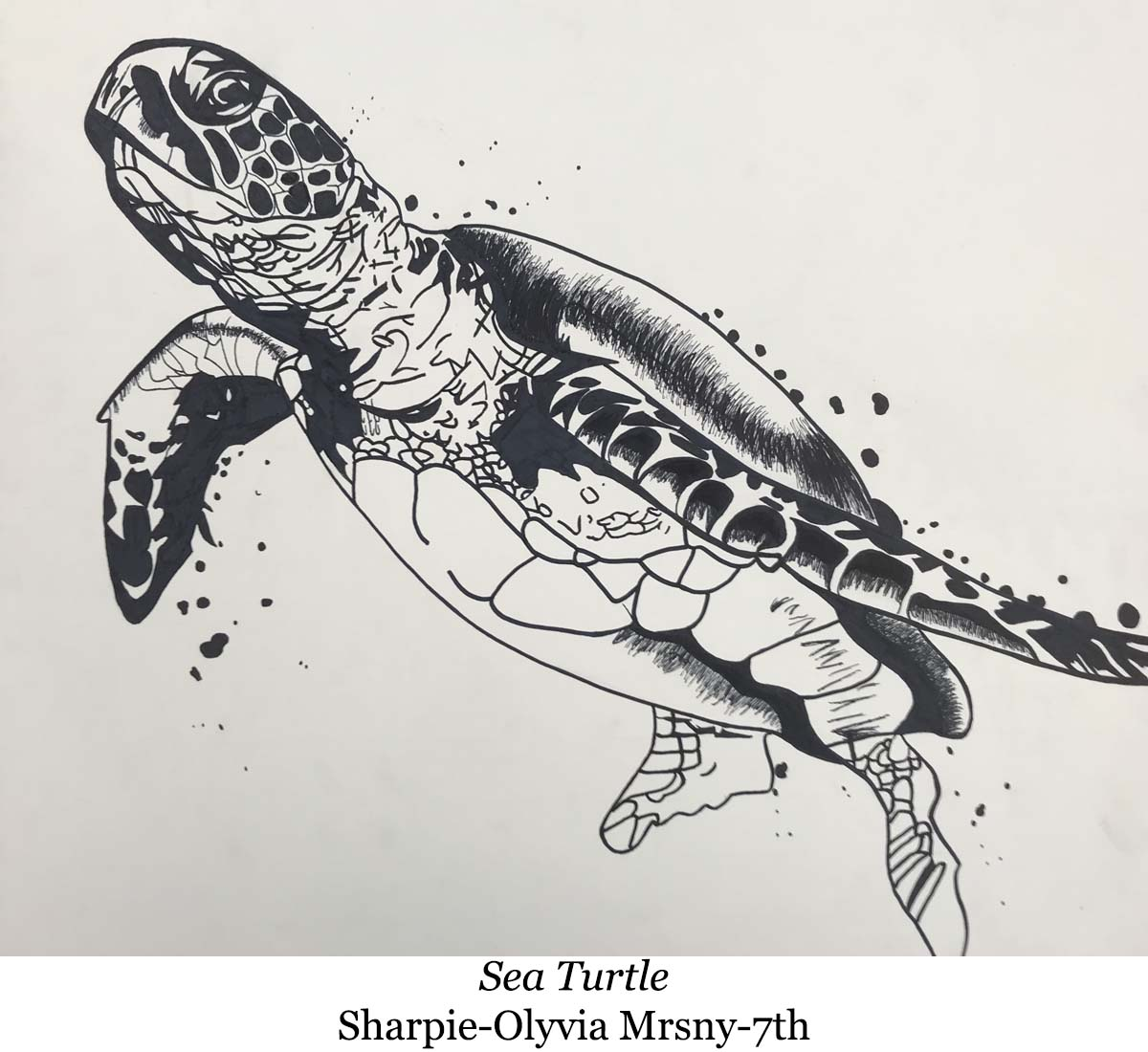 1587088183-sea_turtle-sharpie-olyvia_mrsny-7th