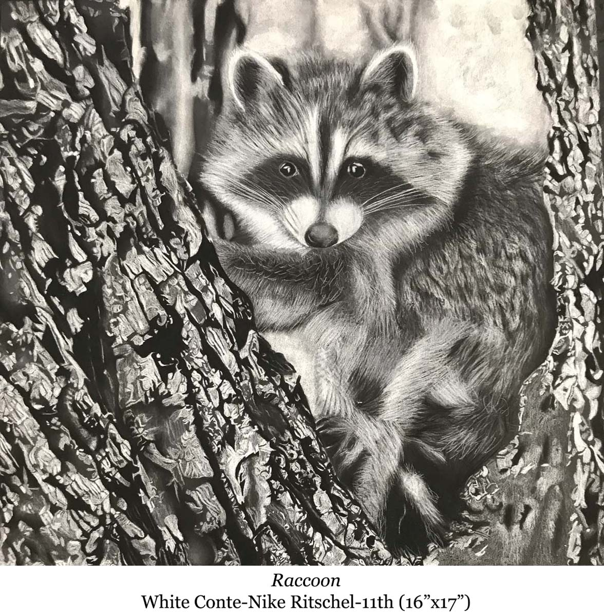 1587093404-raccoon-white_conte-nike_ritschel-11th__16_x17__