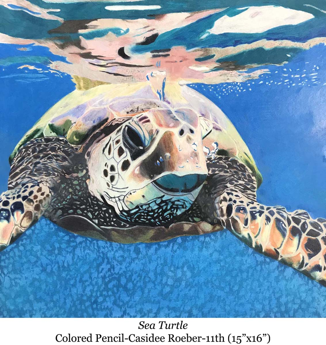 1588002939-sea_turtle-colored_pencil-casidee_roeber-11th__15_x16__