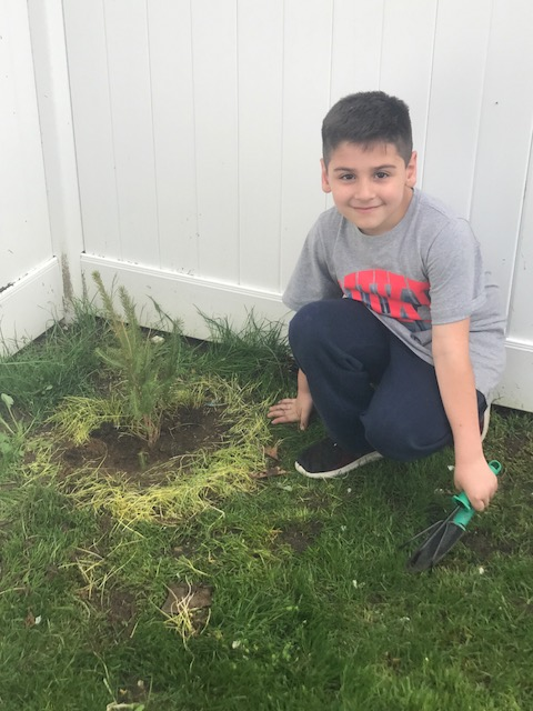 he 1st Graders were given trees to plant in honor of Earth Day. Pictured is Noah (1-A) planting his.